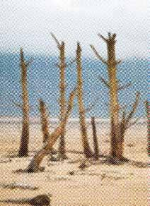Environmental scientists calculated that alien trees growing wild or farmed in the city's main catchments were drinking the equivalent of two months' supply of water at the height of the drought.